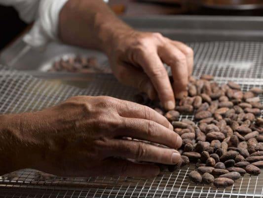 ORFEVE-Manufacture-Suisse-de-Cacao-et-Chocolat---Tri-des-feves----photo-diode-SA-Denis-Hayoun_6_